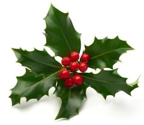 Image of a sprig of holly